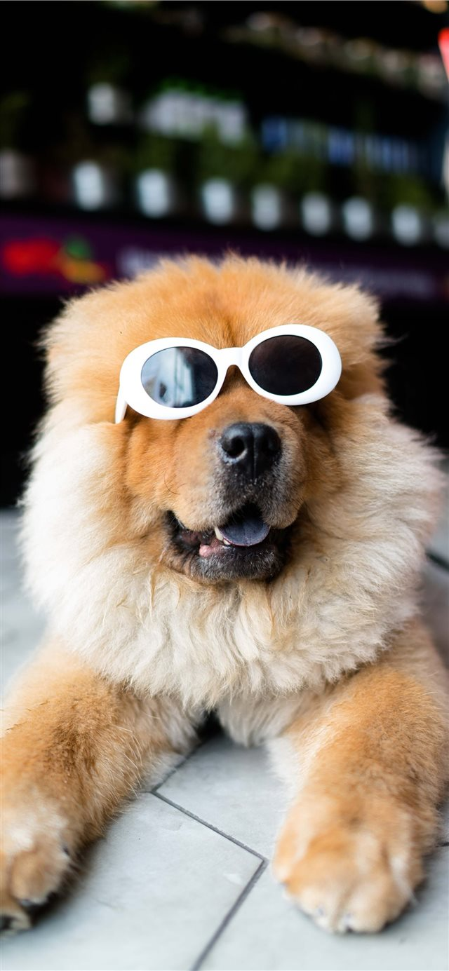 Clout Doggo iPhone 11 wallpaper