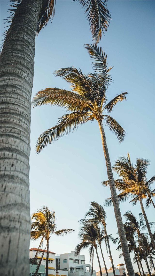 Miami Beach  United States iPhone 8 wallpaper