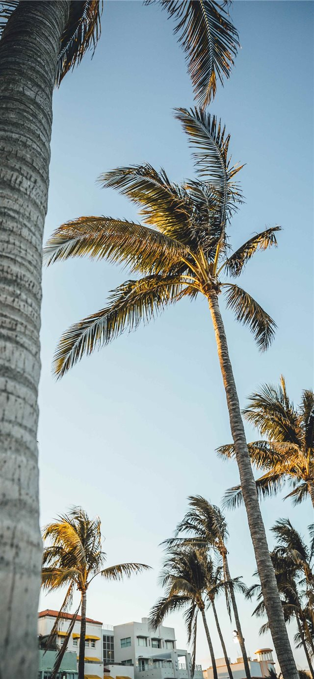 Miami Beach  United States iPhone X wallpaper