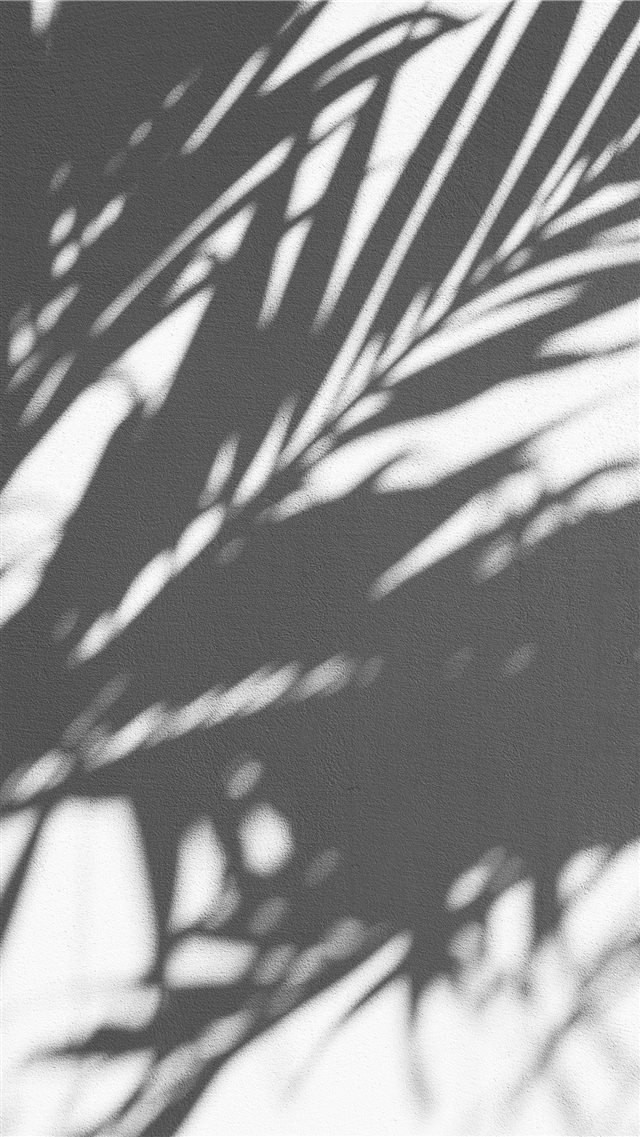 PALM TREE SHADOW iPhone 8 wallpaper