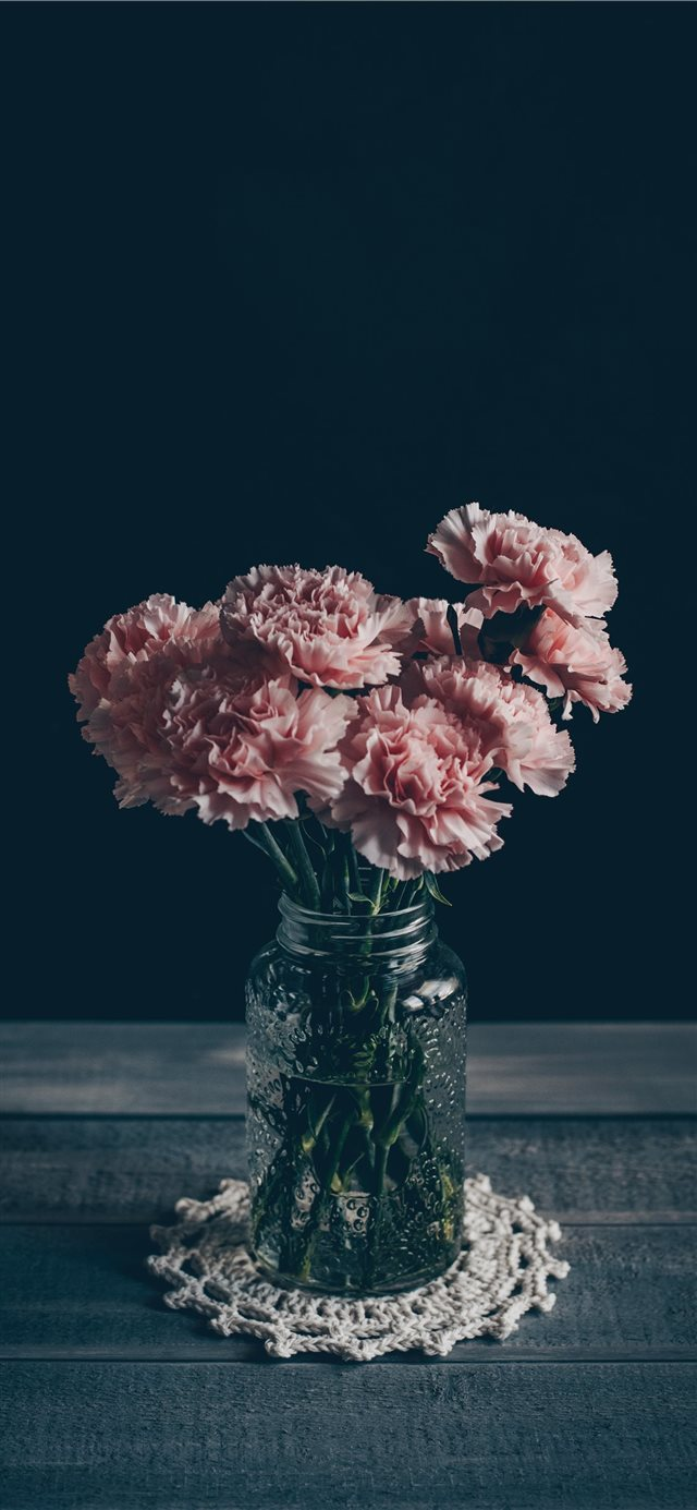 Pink Carnations iPhone X wallpaper