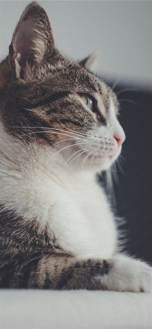 cat iPhone 11 wallpaper