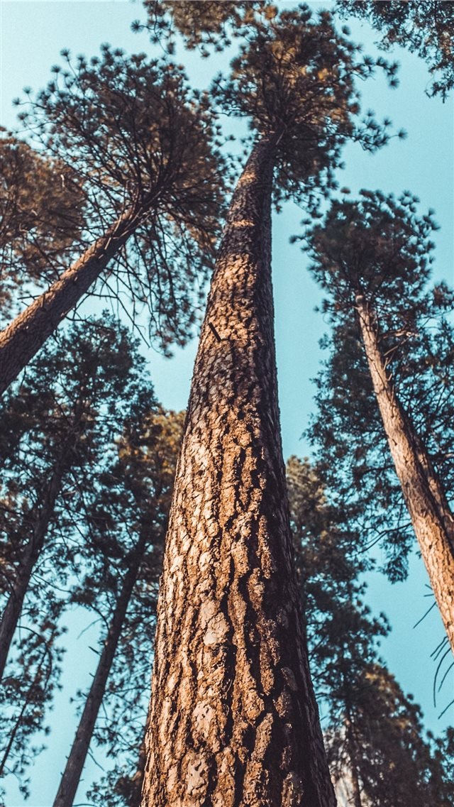 tree iPhone SE wallpaper
