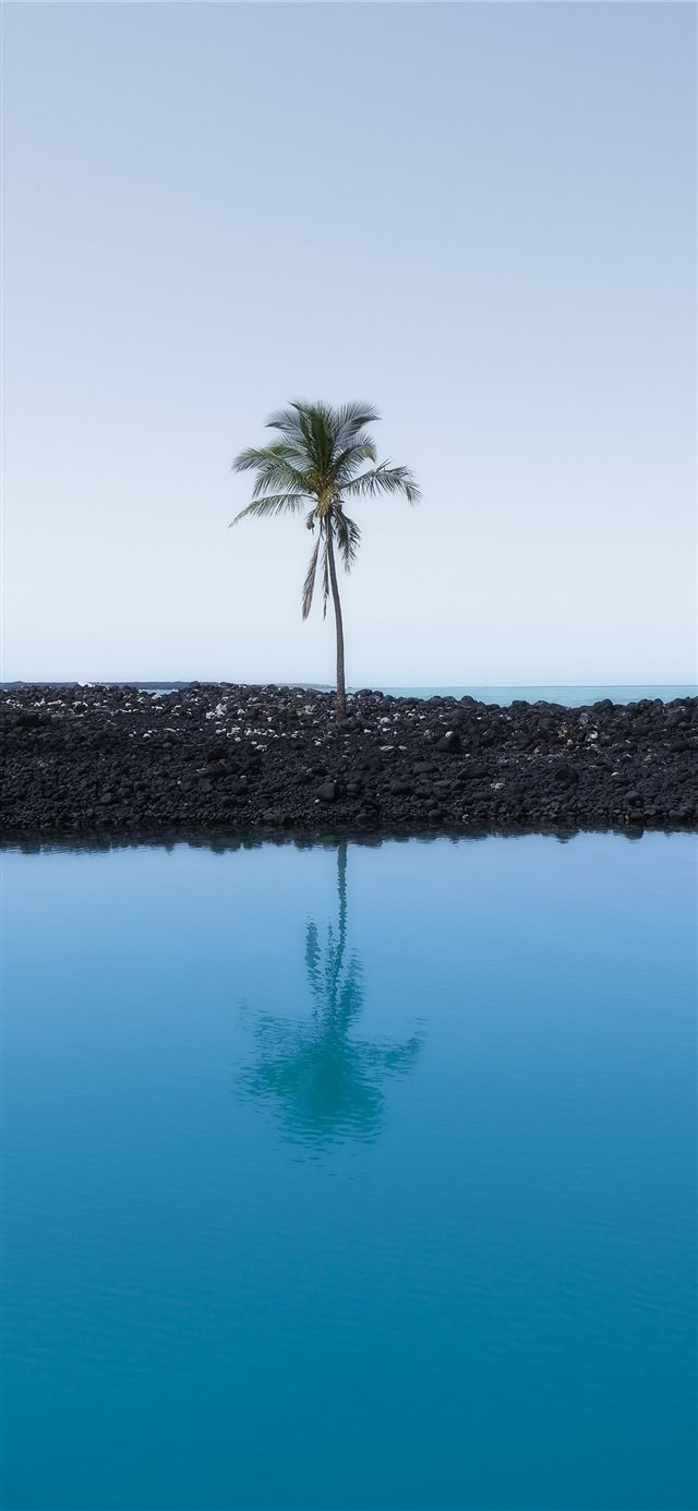 Lone Palm iPhone X wallpaper