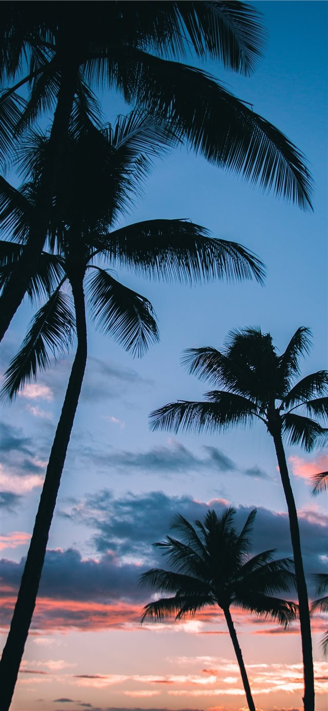 Palm Trees in Paradise iPhone 11 wallpaper