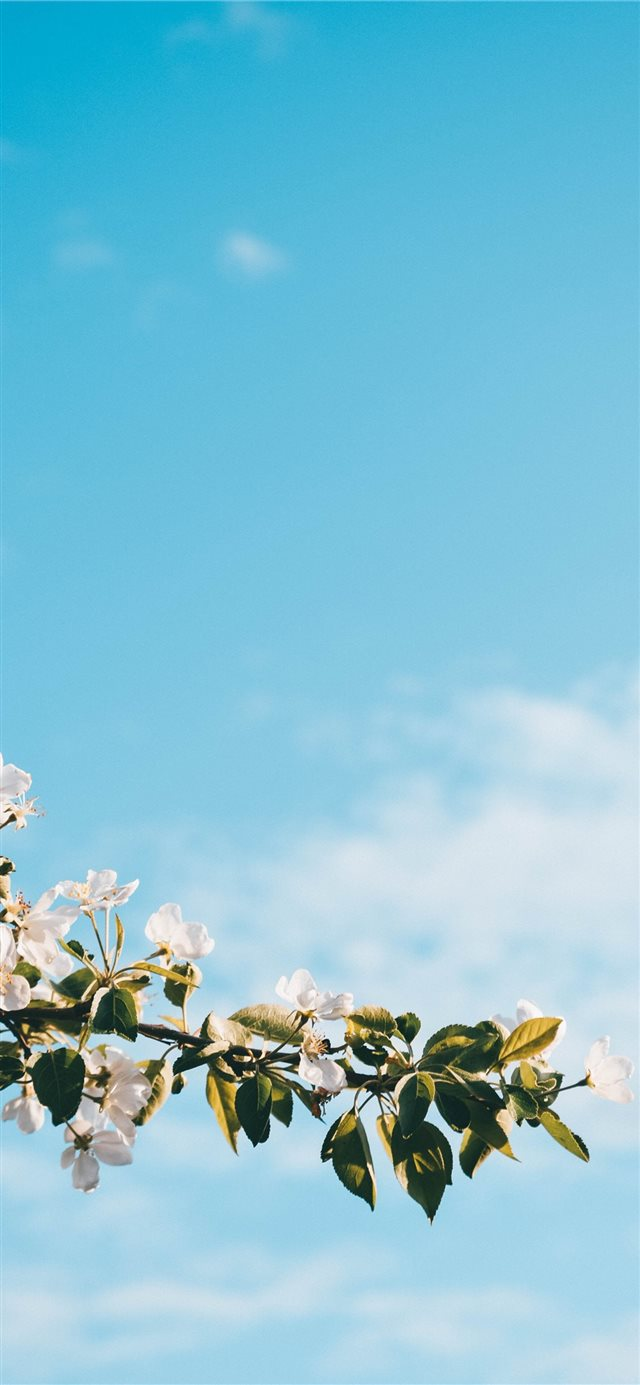 apple iPhone 11 wallpaper
