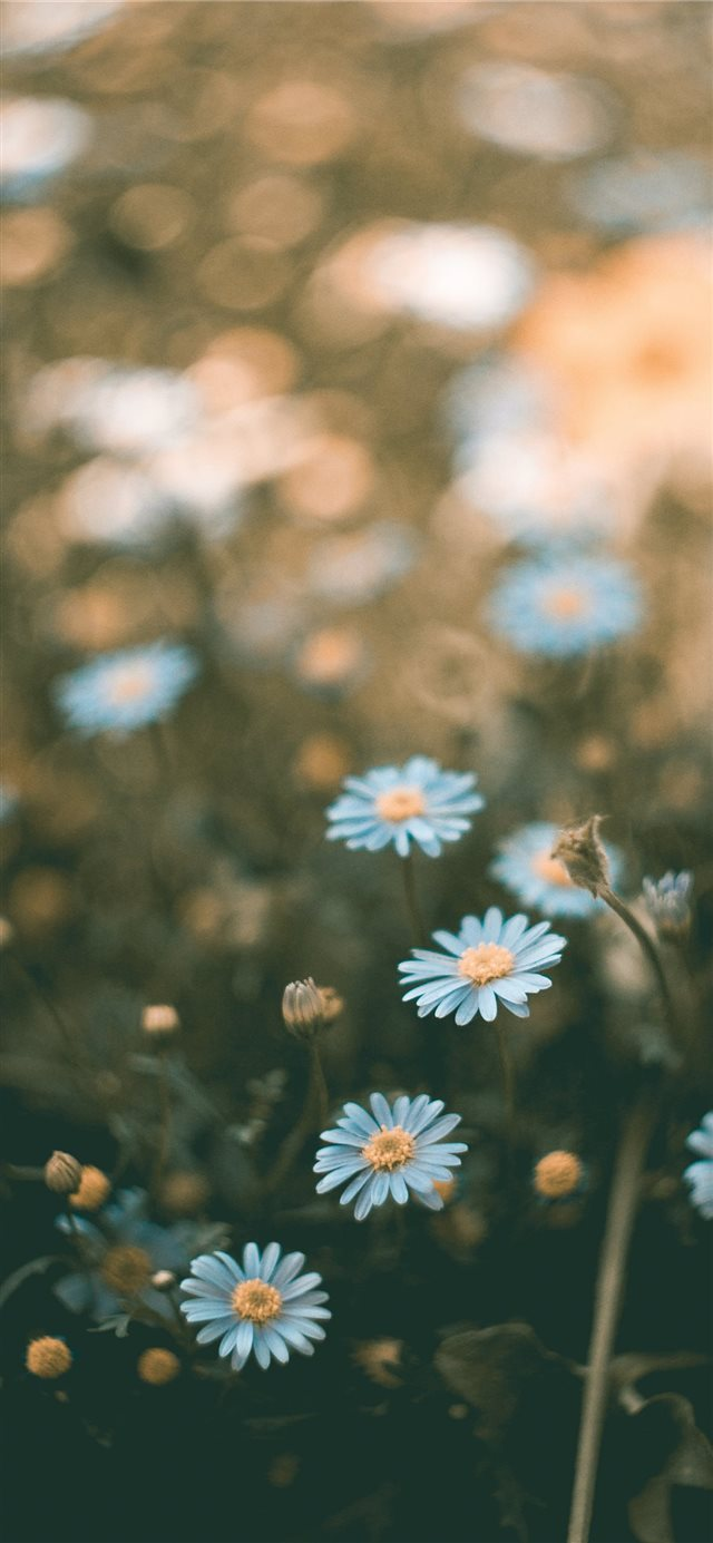 flower iPhone X wallpaper