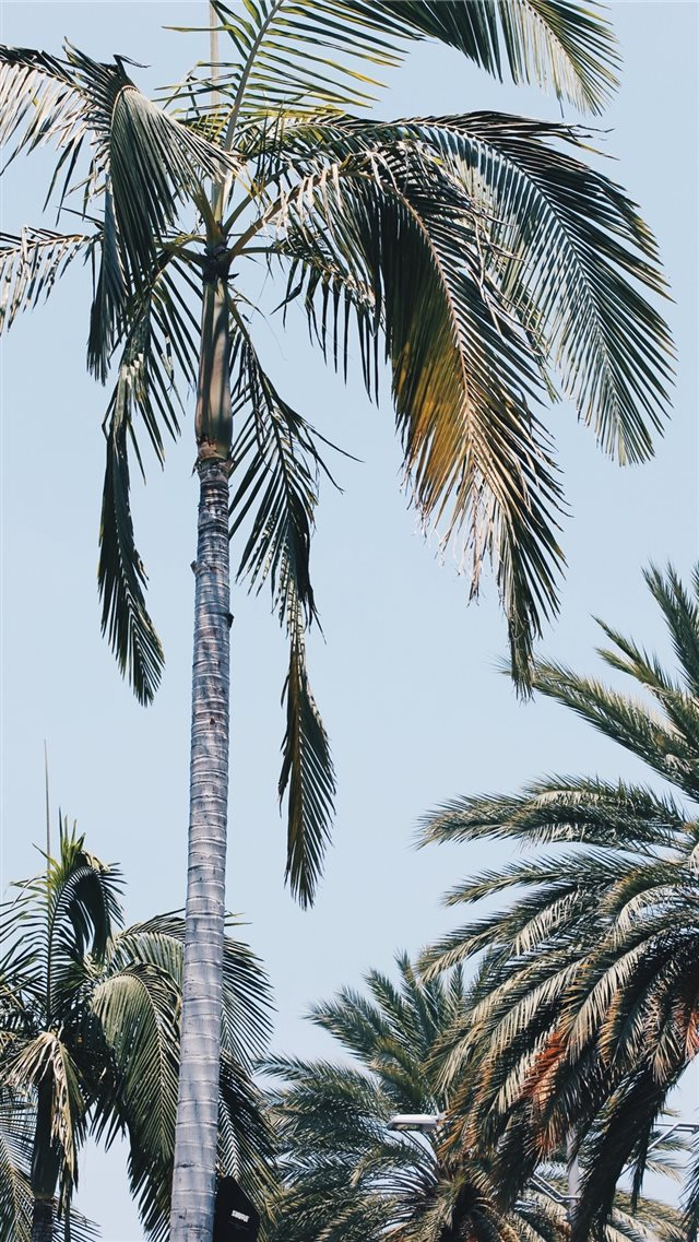 Beverly Palms iPhone 8 wallpaper