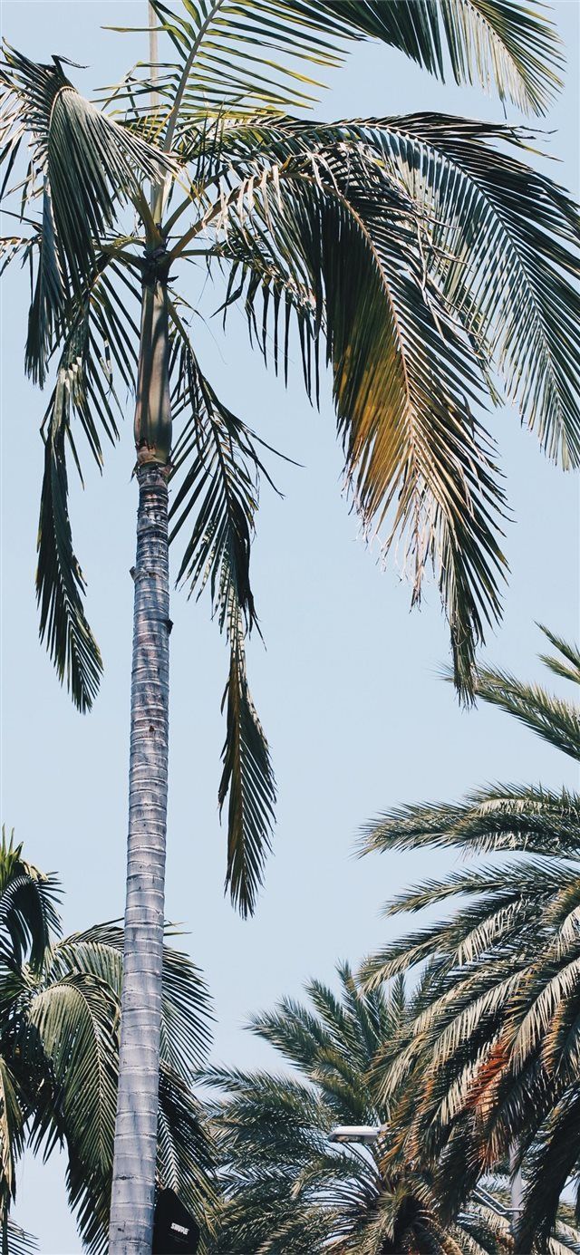 Beverly Palms iPhone X wallpaper