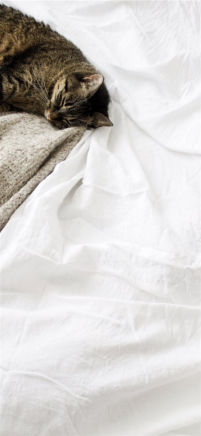 Cat sleeping white blanket iPhone X wallpaper