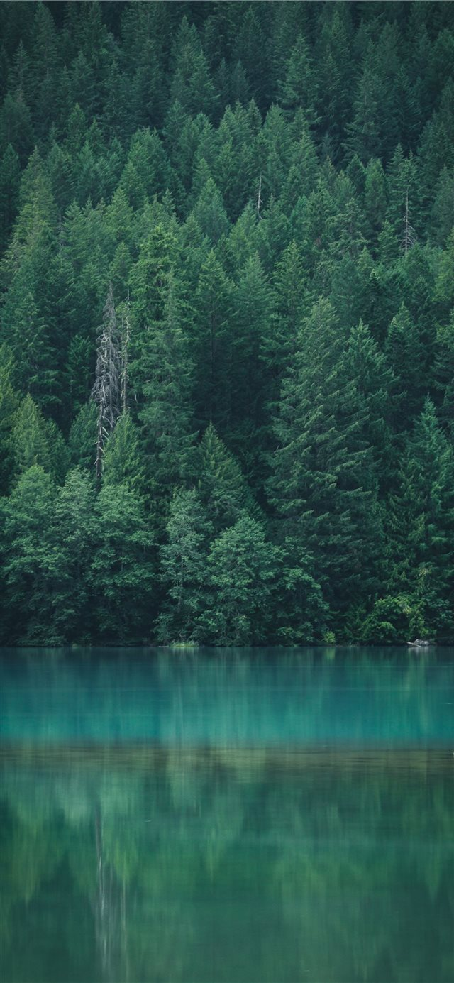 Forest reflection at Diablo Lake iPhone X wallpaper