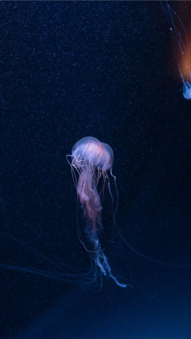 SEA LIFE Brighton  Sussex  United Kingdom iPhone SE wallpaper