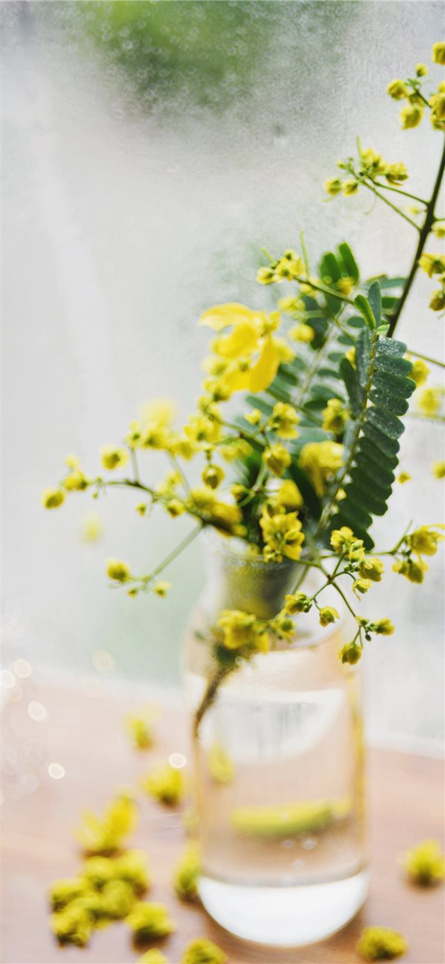 Still life with yellow wild flowers in a vase iPhone X wallpaper