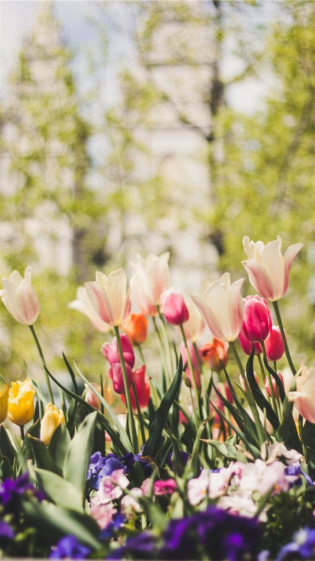 Temple Square in Spring iPhone SE wallpaper