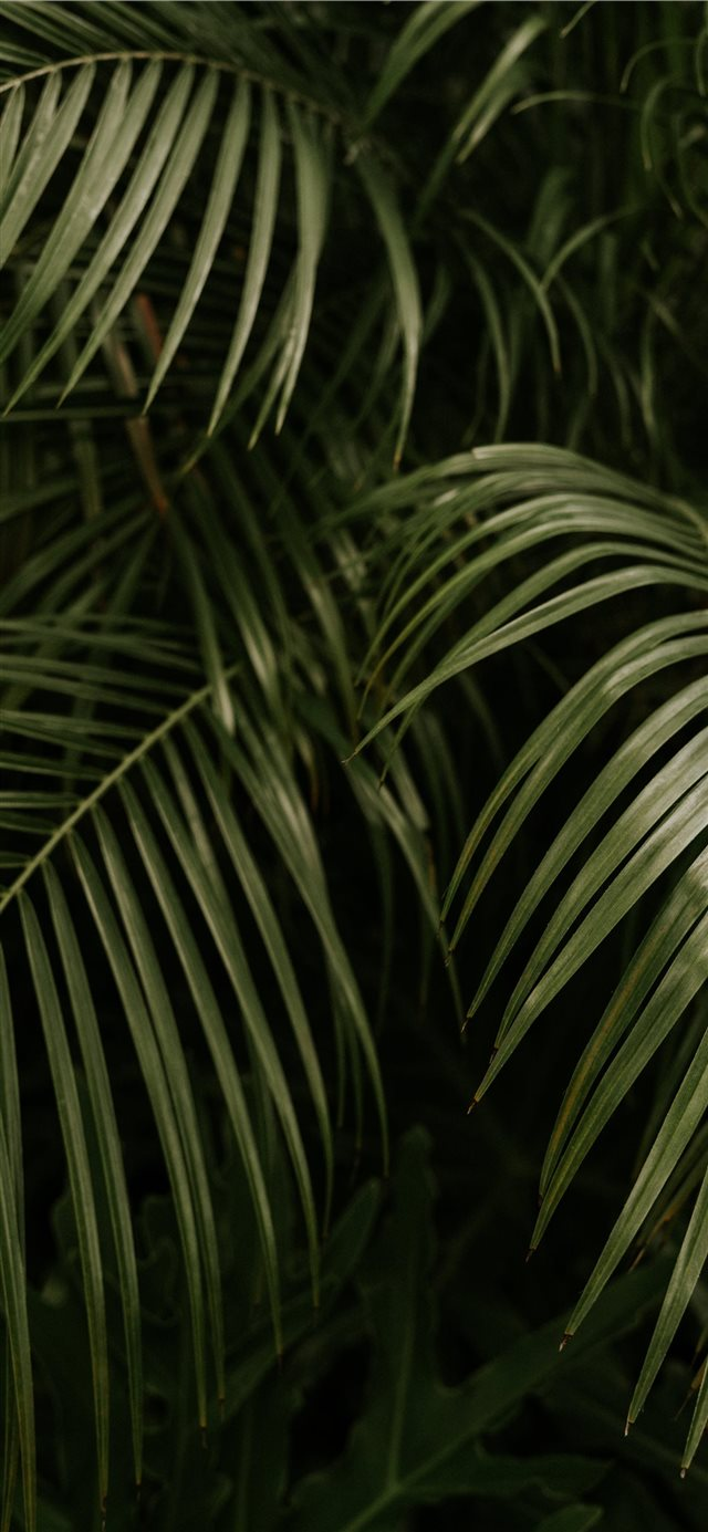 The Palms iPhone X wallpaper