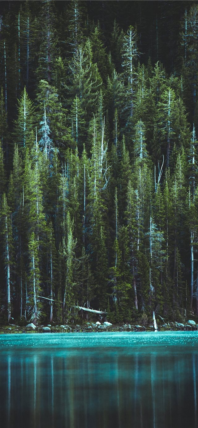 Woods iPhone X wallpaper