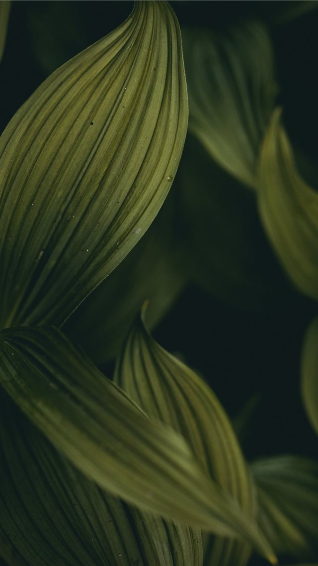 dark groves iPhone SE wallpaper