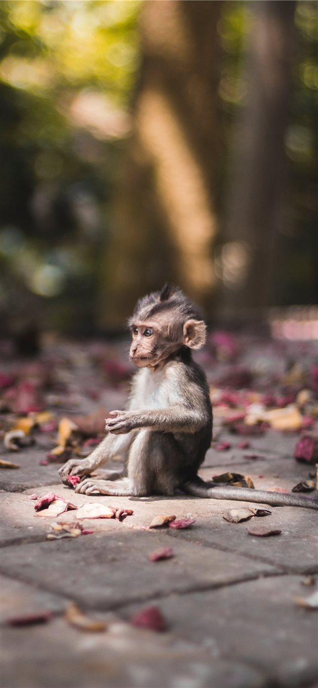 Baby monkey found in Sacred Monkey Forrest in Ubud iPhone X wallpaper
