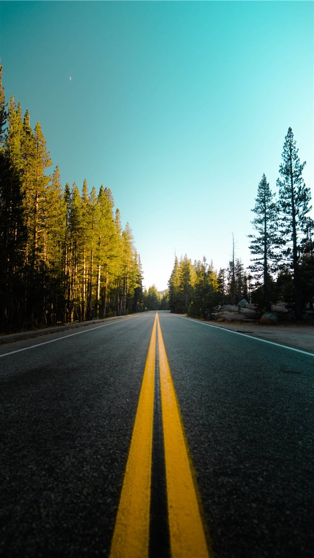 Driving Through the Woods iPhone SE wallpaper