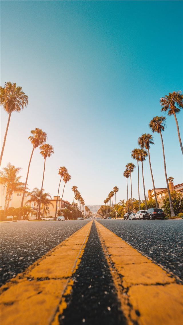 Follow the Yellow Palmed Road iPhone 8 wallpaper