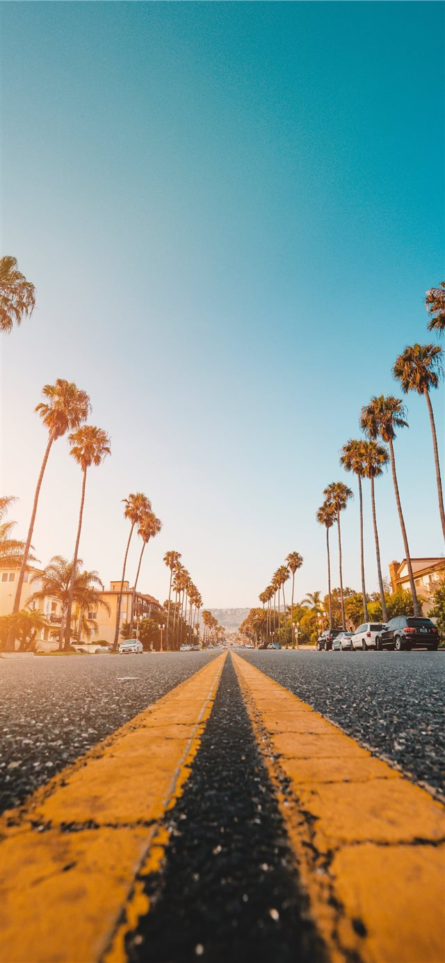 Follow the Yellow Palmed Road iPhone X wallpaper