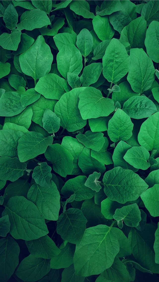Little Forest iPhone SE wallpaper
