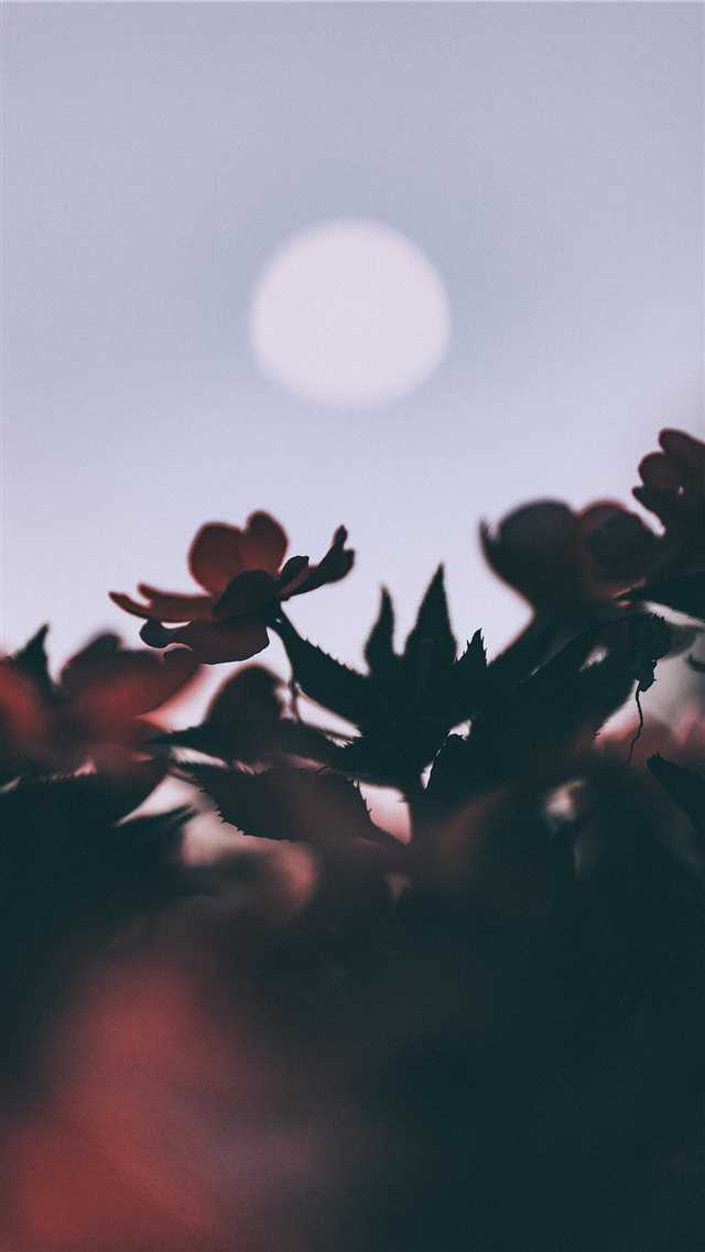Oleander and moon iPhone 8 wallpaper