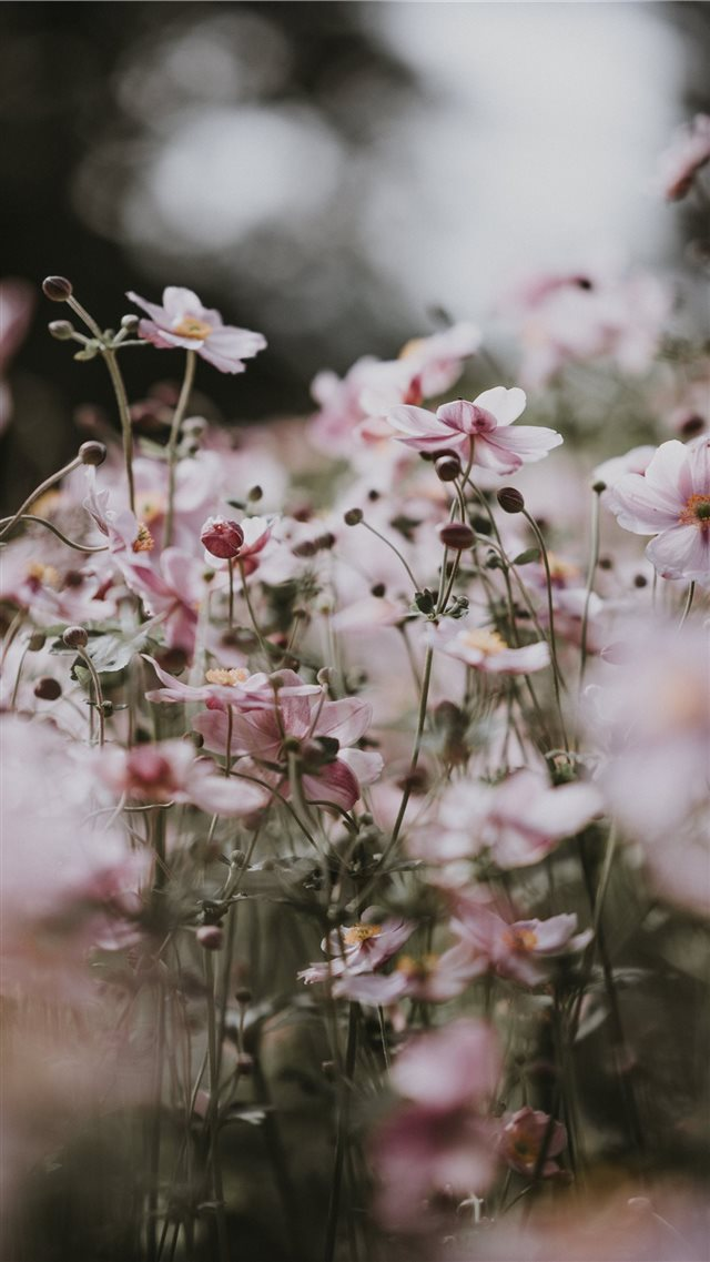Pastel pink flowers iPhone 8 wallpaper