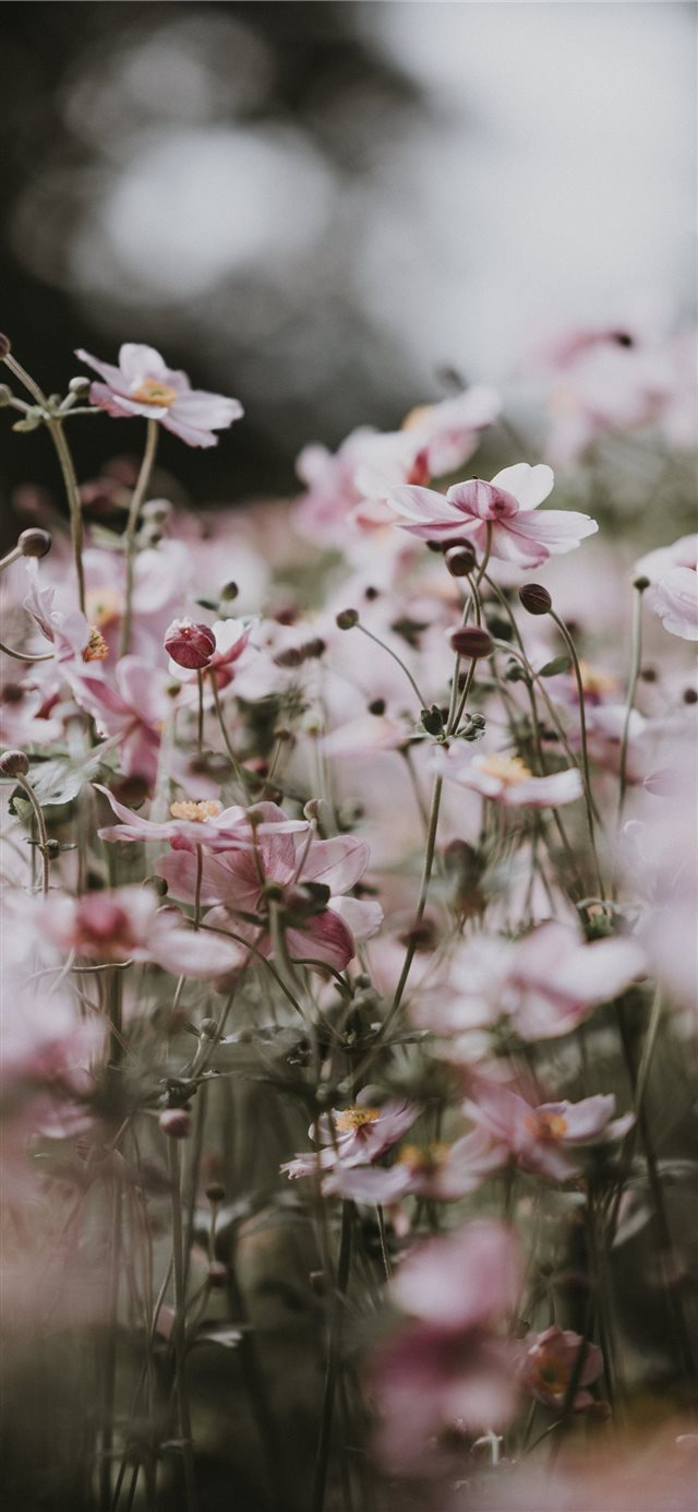Pastel pink flowers iPhone 11 wallpaper
