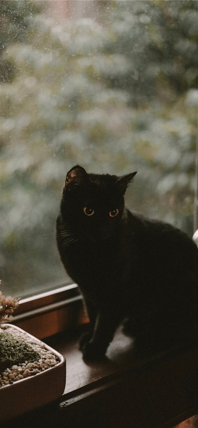 black cat iPhone X wallpaper