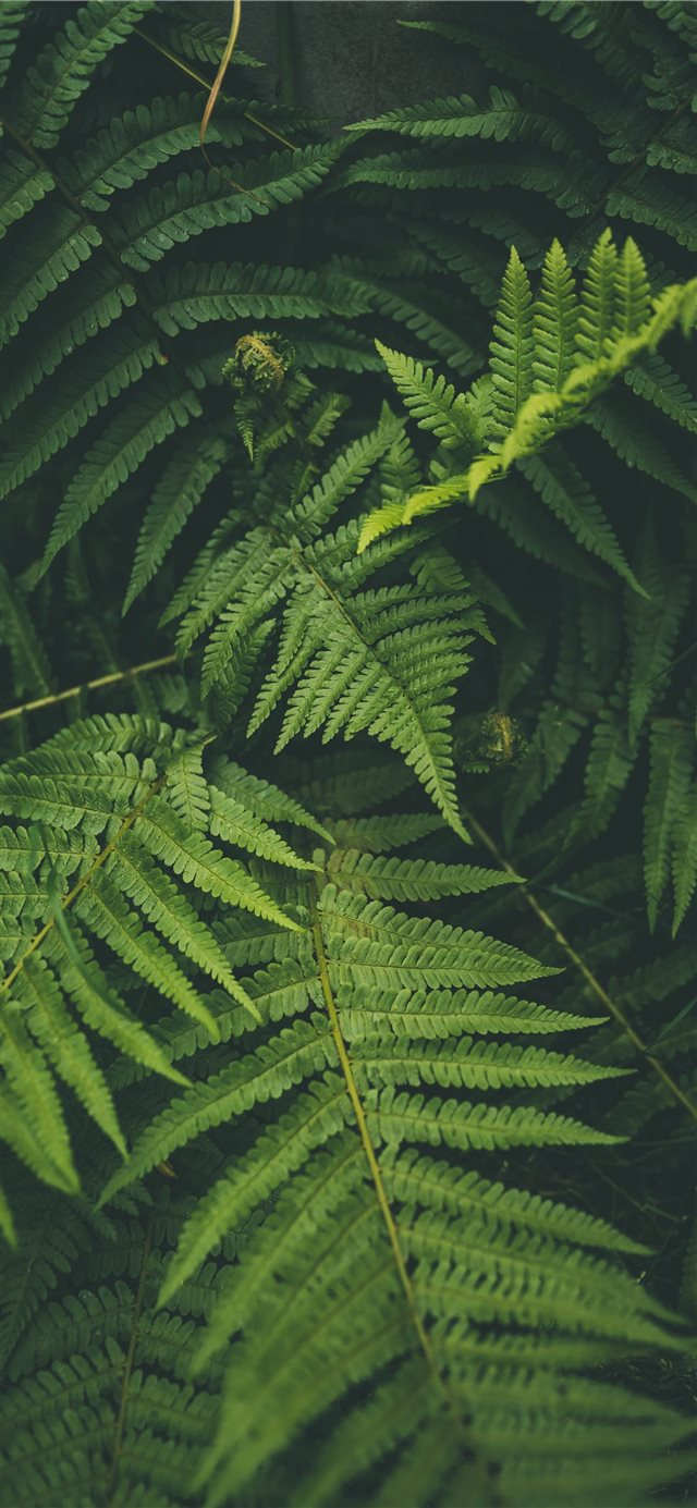 outdoor iPhone 11 wallpaper