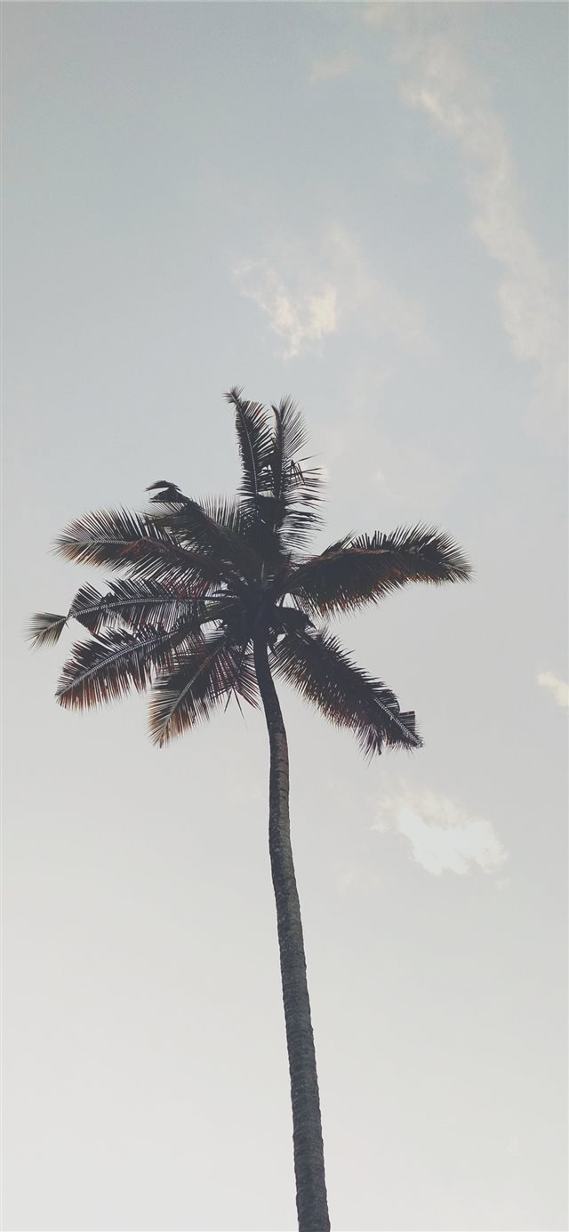 tree iPhone X wallpaper