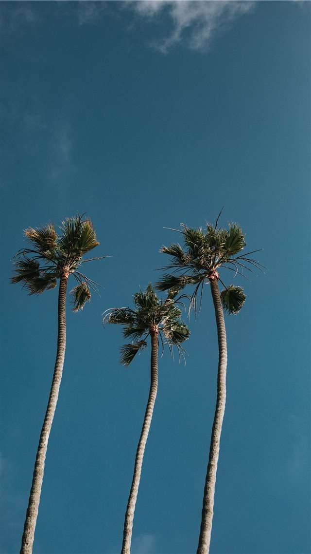 Palm Tree Trio iPhone SE wallpaper