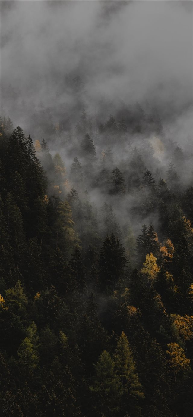 The autumn iPhone 11 wallpaper