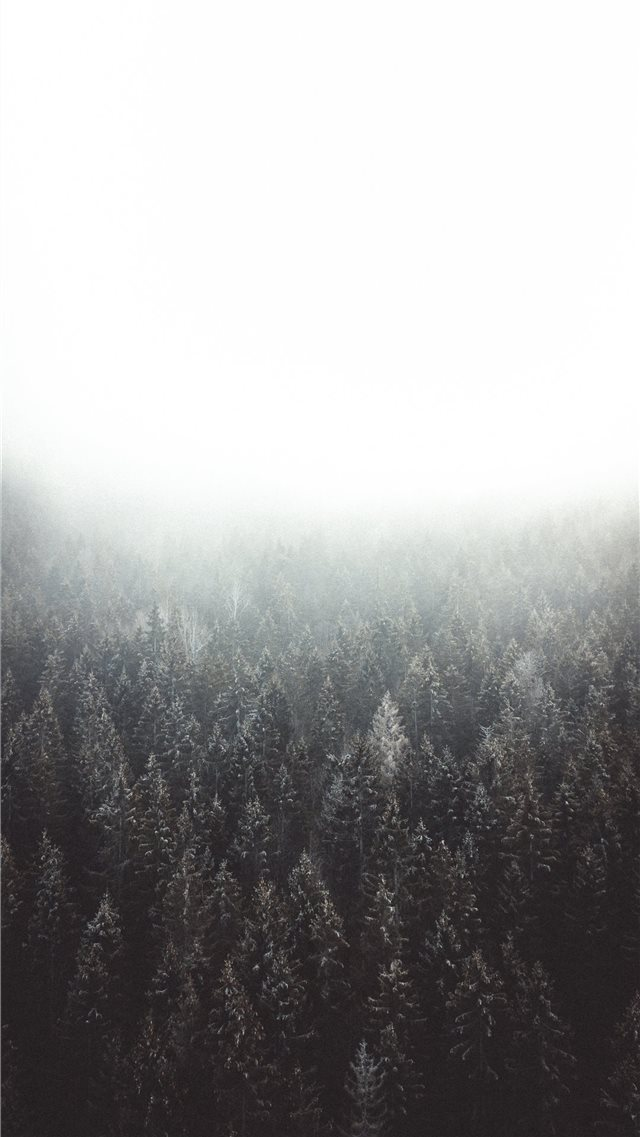 Lost in the woods iPhone SE wallpaper