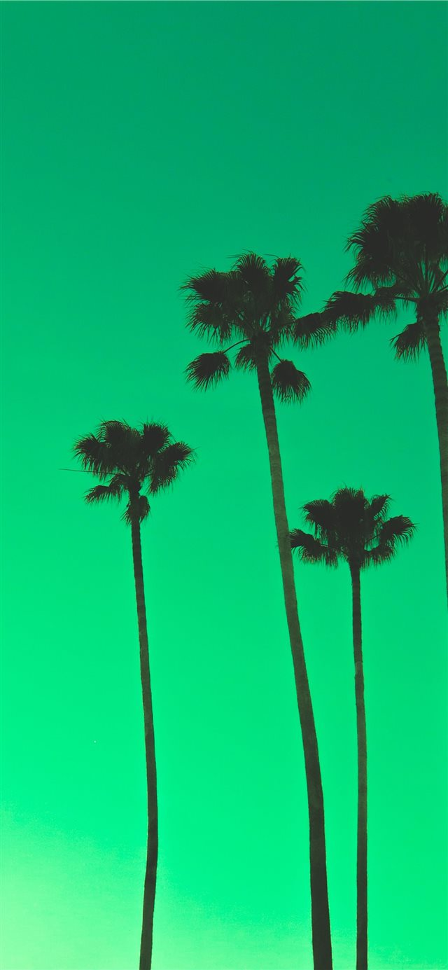 four palm trees iPhone X wallpaper
