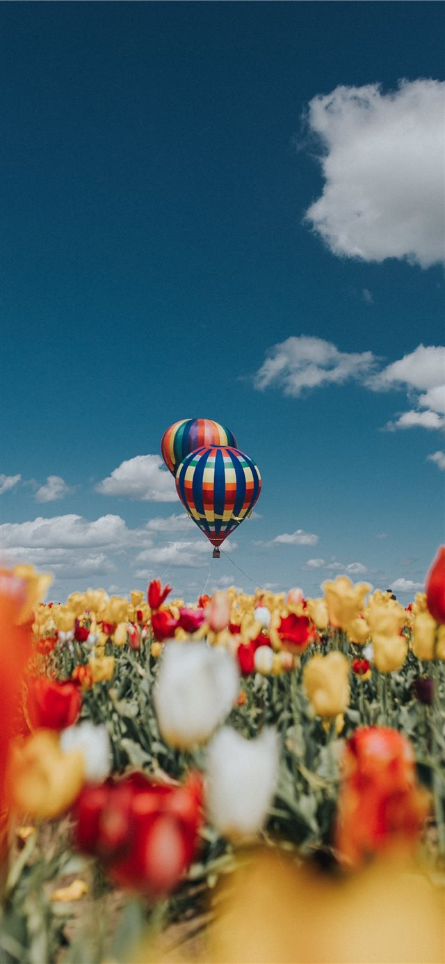Balloon Over Tulips iPhone 11 wallpaper