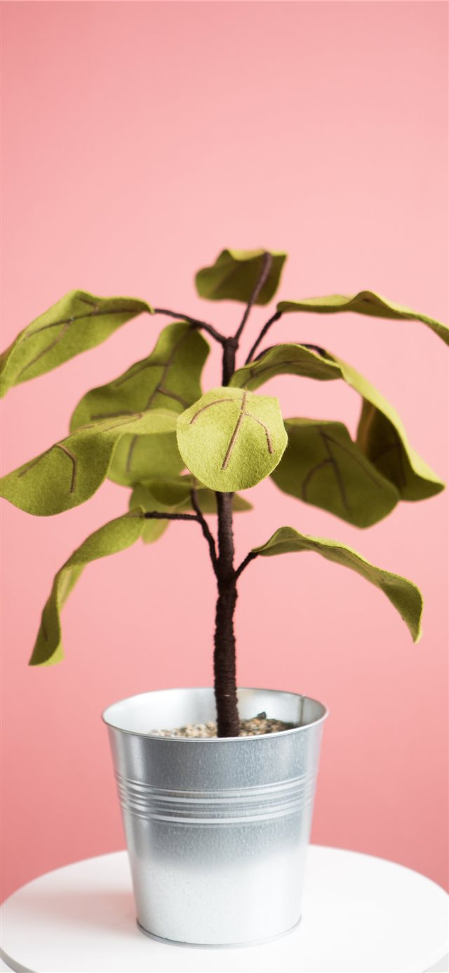 Ficus plant from Felt iPhone 11 wallpaper