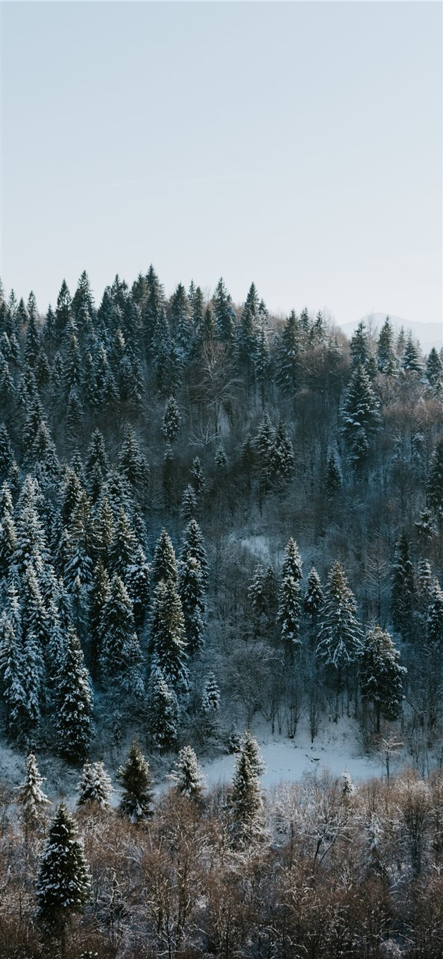 Winter wonderland iPhone X wallpaper