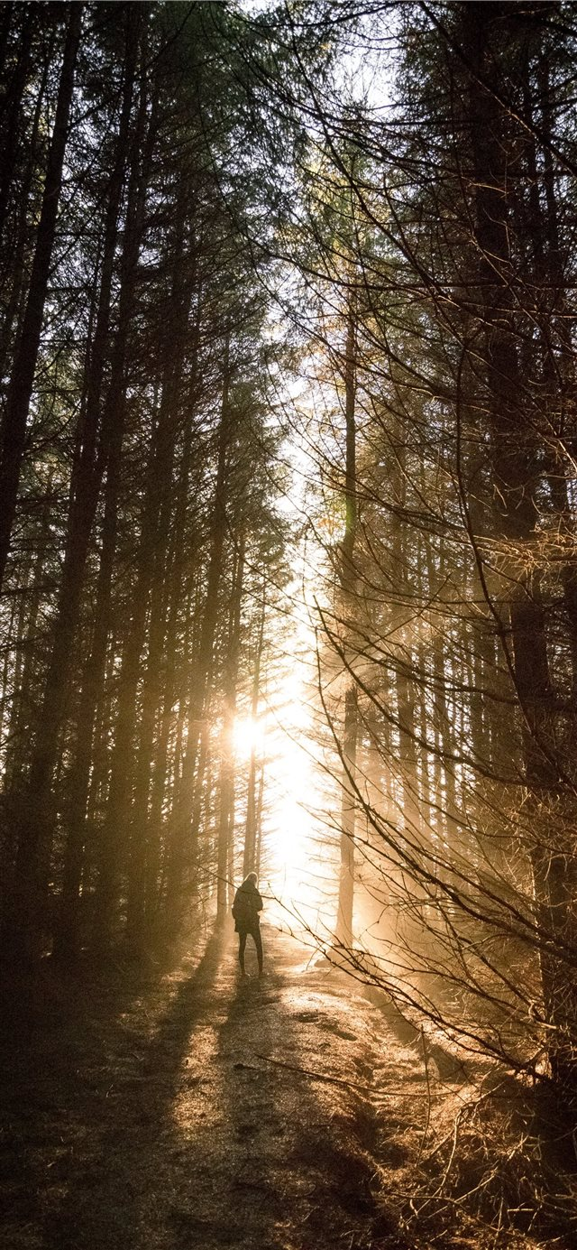 Incredible sunset through the woods iPhone 11 wallpaper
