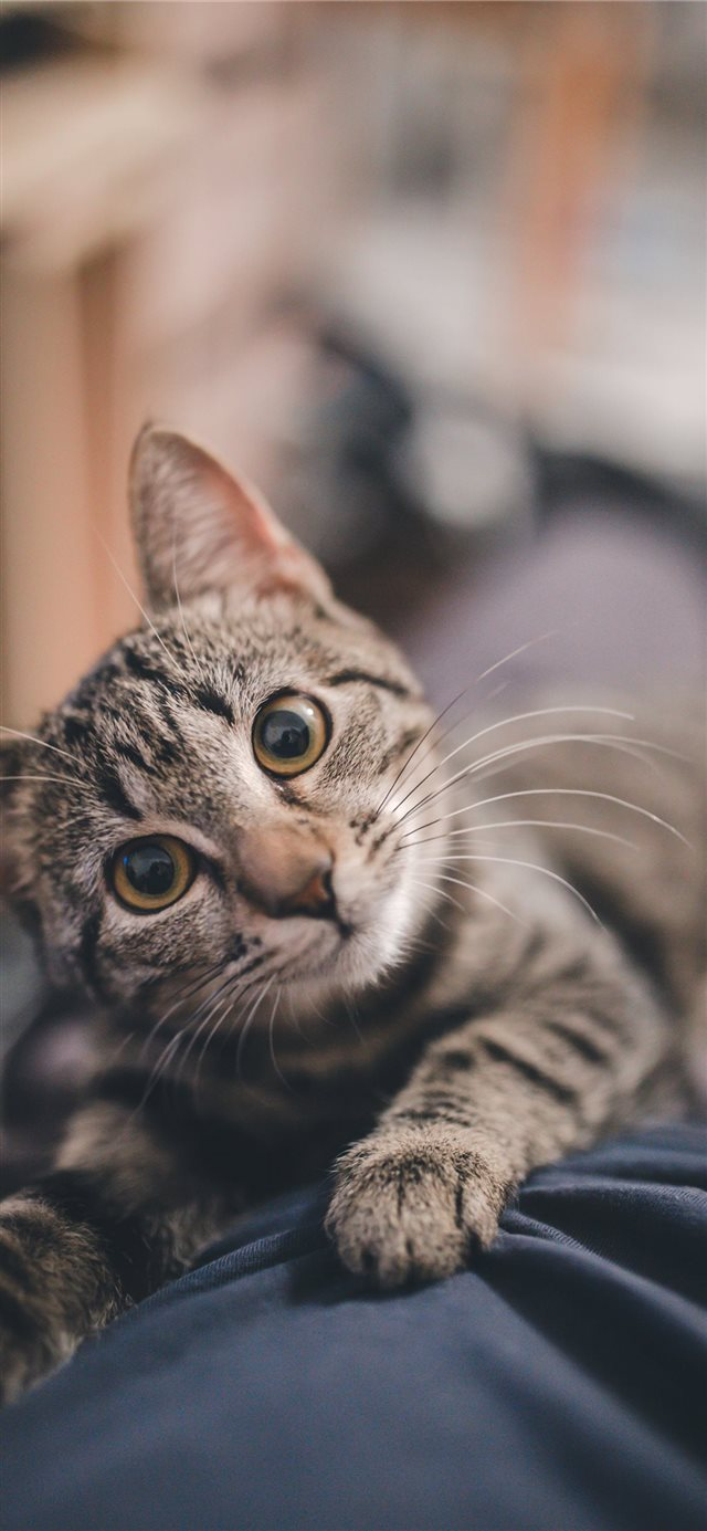 Cute kitty iPhone X wallpaper