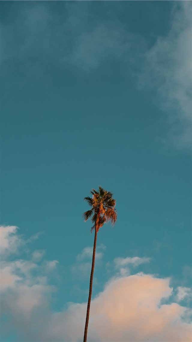 low angle photography of palm tree under blue sky iPhone 8 wallpaper
