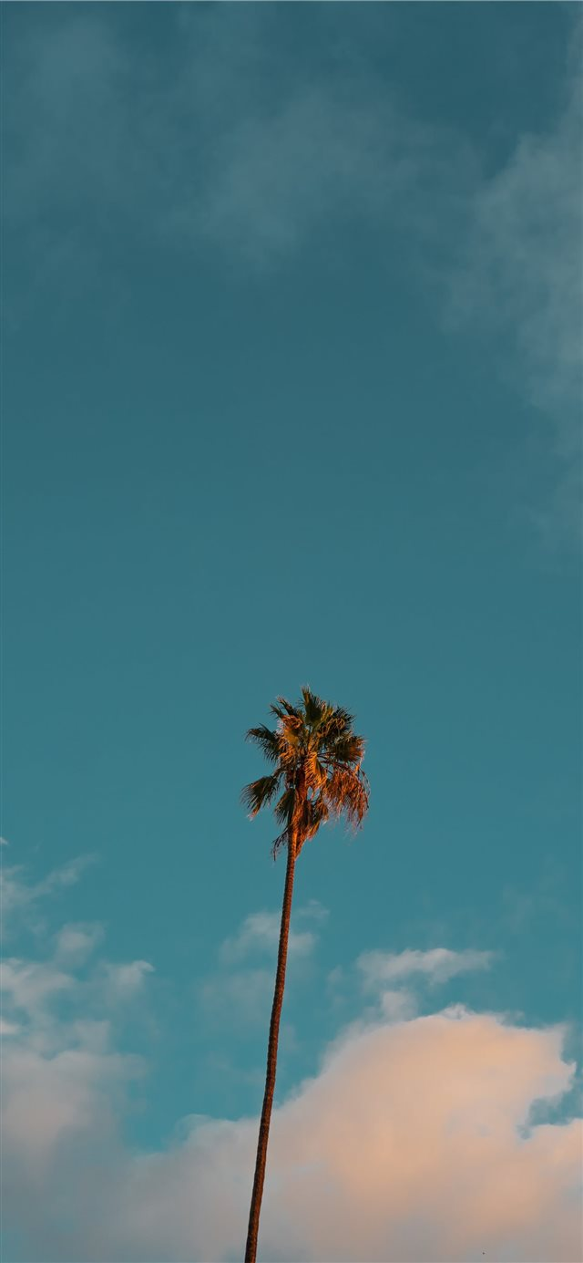 low angle photography of palm tree under blue sky iPhone X wallpaper