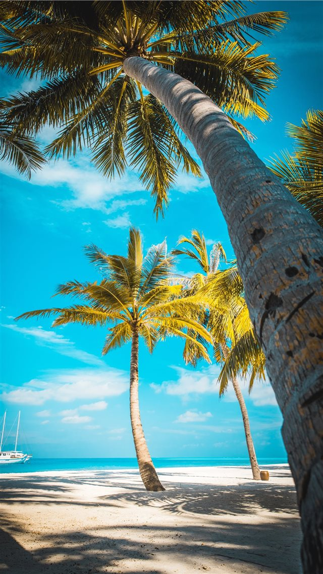 palm trees at the shore near boat during day iPhone 8 wallpaper