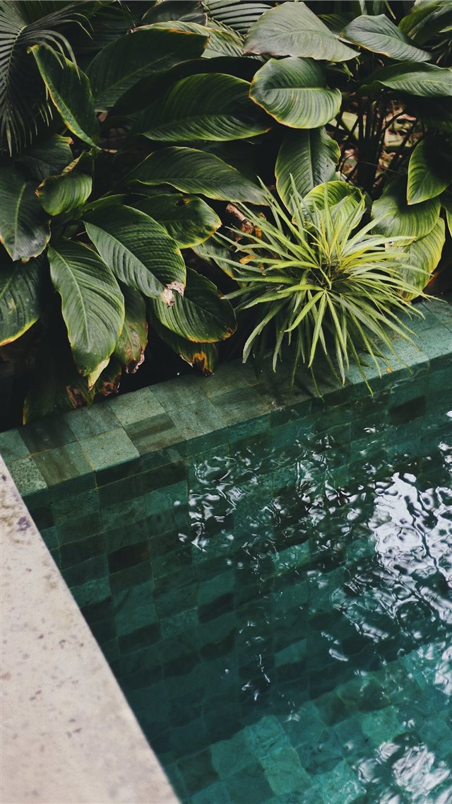 The Slow  Bali  Indonesia iPhone SE wallpaper