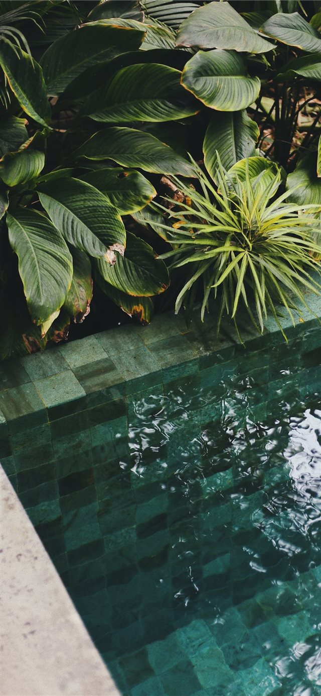 The Slow  Bali  Indonesia iPhone X wallpaper