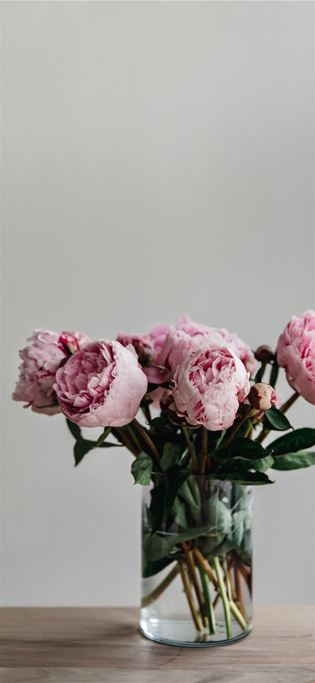 This simple image of a bunch of peonies in a vase ... iPhone X wallpaper