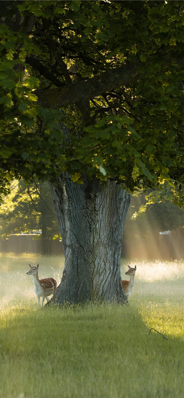 Bushy Park  Richmond  United Kingdom iPhone X wallpaper
