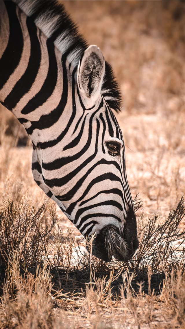 Etosha National Park iPhone 8 wallpaper