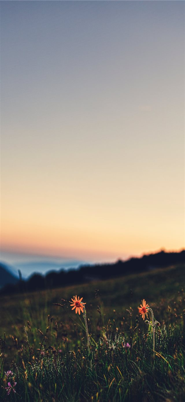 Honeymoon in the meadows of Sass Putia! iPhone X wallpaper